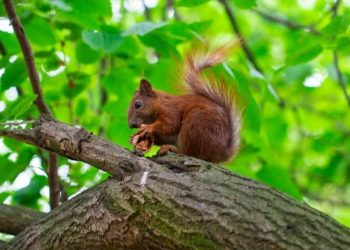 A Beginner's Guide To Hunting Squirrel