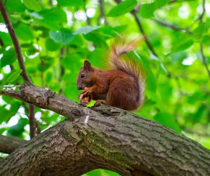 You are currently viewing A Beginner's Guide To Hunting Squirrel