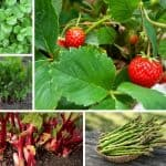 Consider Growing These 7 Perennials On Your Homestead