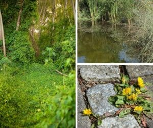 Photo of various natural ecosystems with permaculture edge
