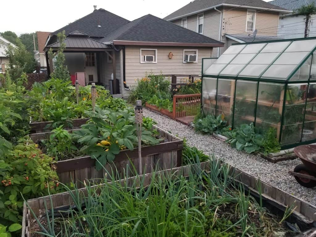 photo of urban homestead backyard garden