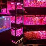 How To Build An Indoor Fish Tank Aquaponics System
