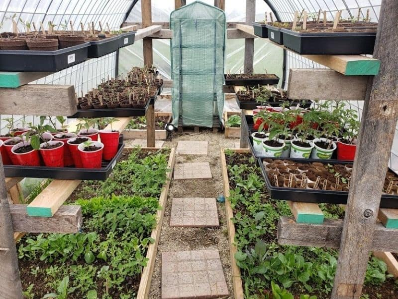 Photo of plants growing inside greenhouse