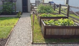 photo of raised garden beds made from pallets
