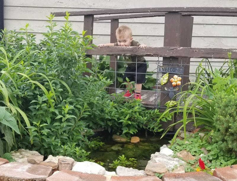 photo of bridge of backyard pond