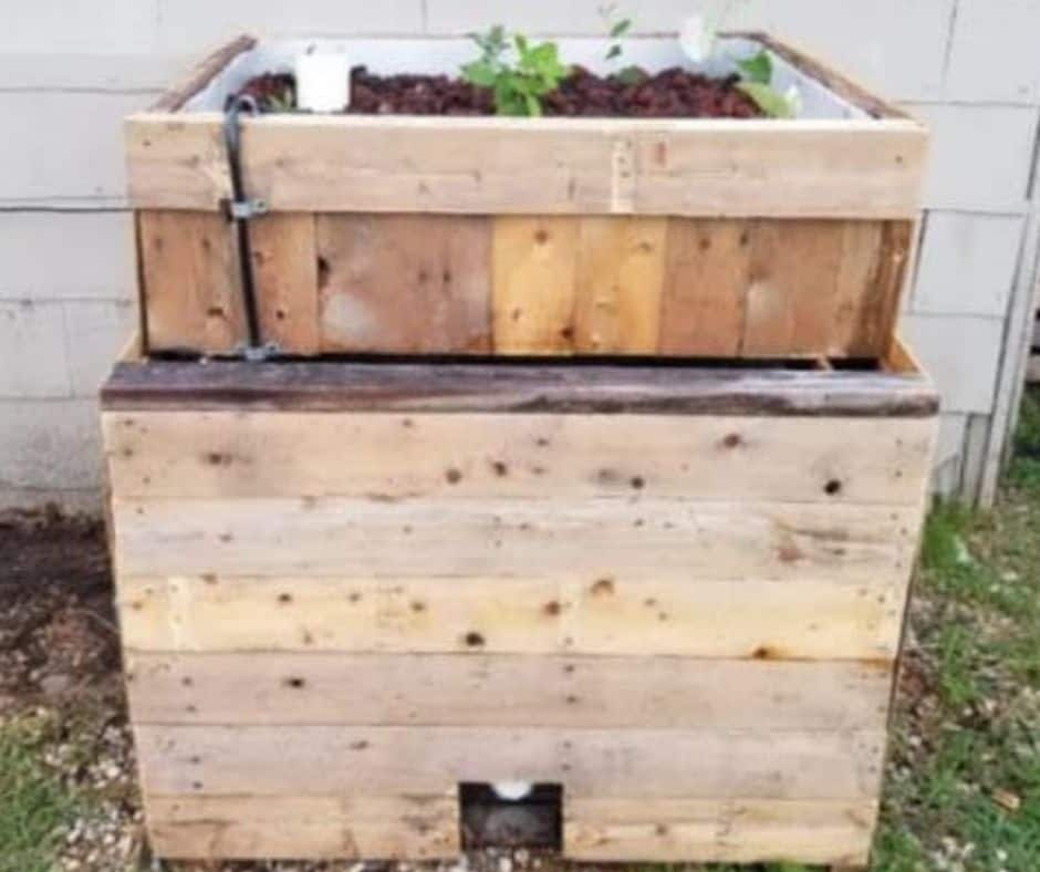 You are currently viewing Cheap and Simple Chop & Flip IBC Aquaponics System