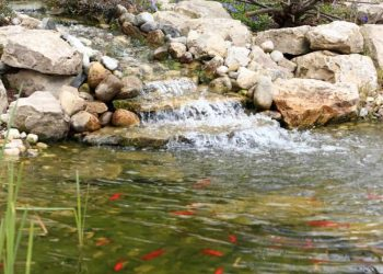What Is Aquaculture In Permaculture Application?