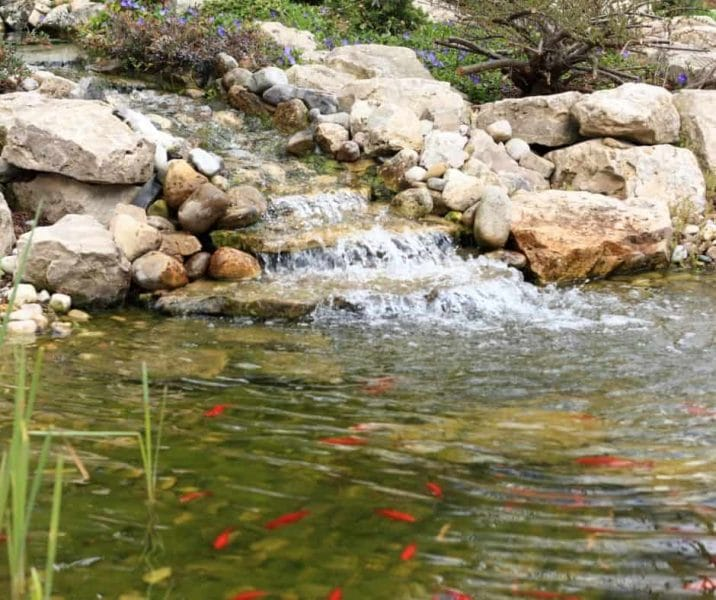 You are currently viewing What Is Aquaculture In Permaculture Application?