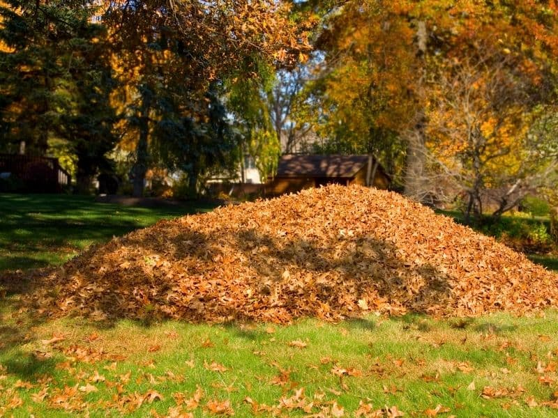Photo of pile of leaves