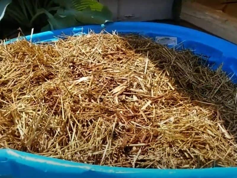 photo of straw soaking in water in pool
