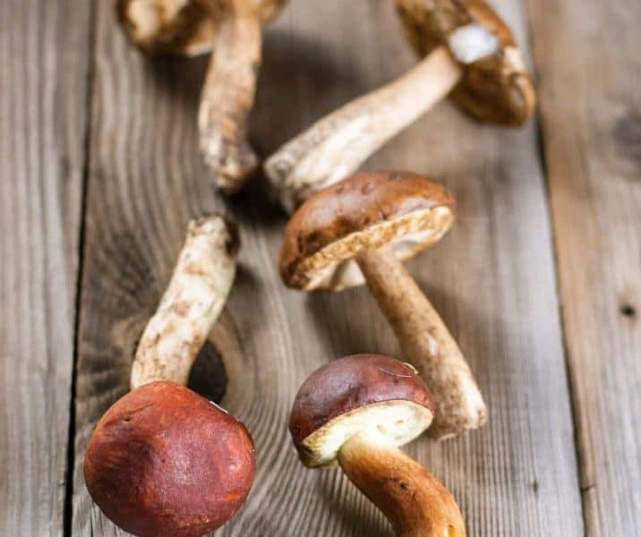 You are currently viewing How To Build A Wine Cap Mushroom Raised Bed