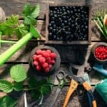 Building A Berry Abundant Permaculture Homestead
