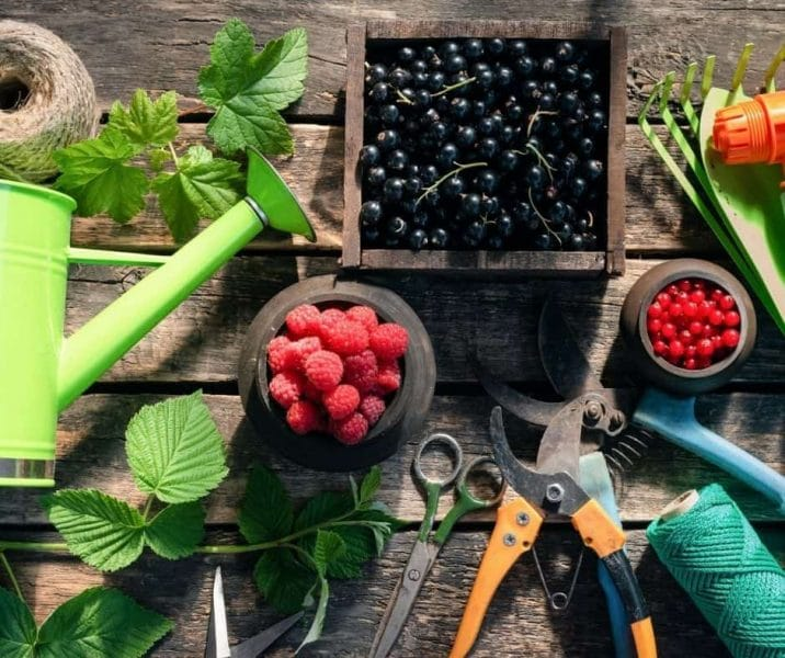 You are currently viewing Building A Berry Abundant Permaculture Homestead