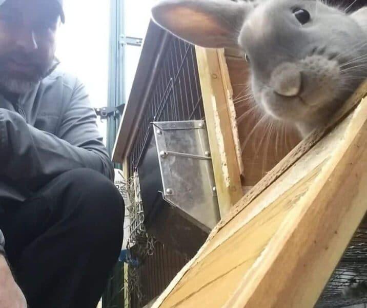 Photo of rabbit in hutch