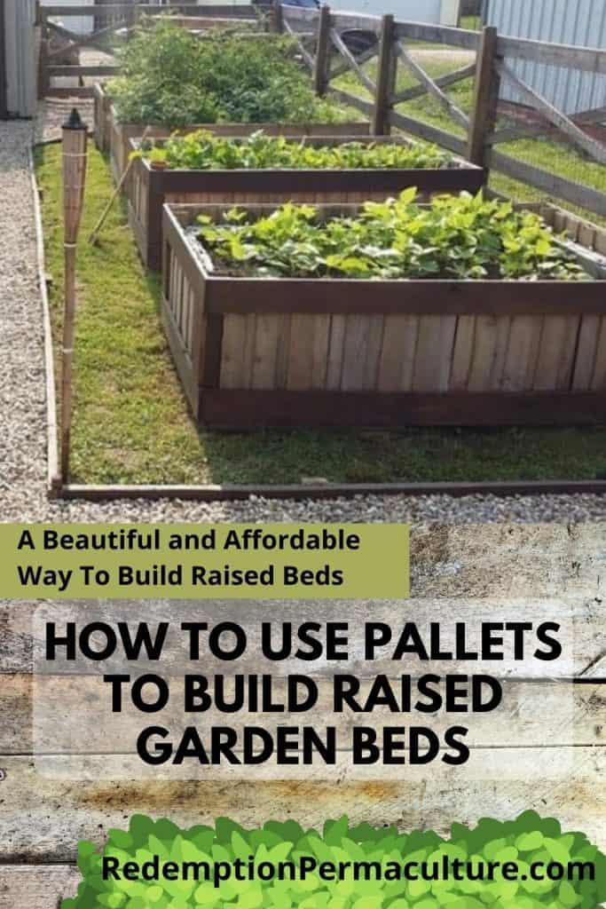 Pinterest image of raised beds