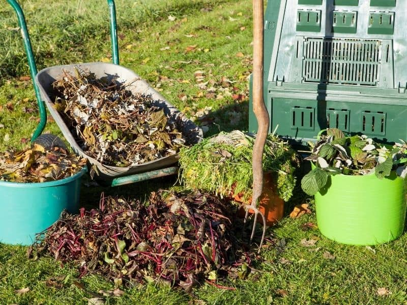 photo of browns and greens for compost