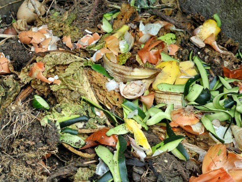 photo of decomposing organic material