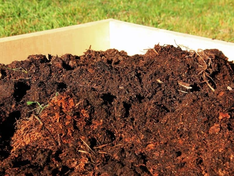photo of composted manure