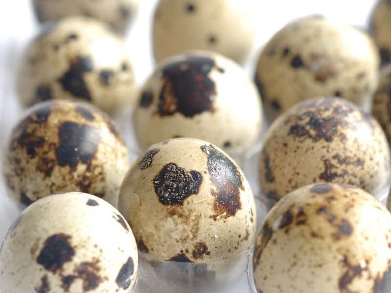 Photo of quail eggs shipped