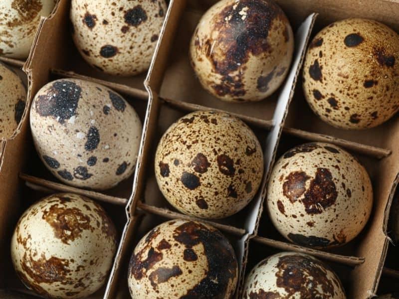 photo of quail eggs