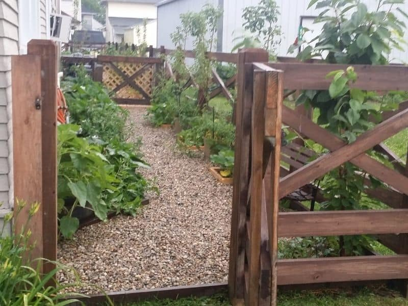 Photo of side garden and fruit trees