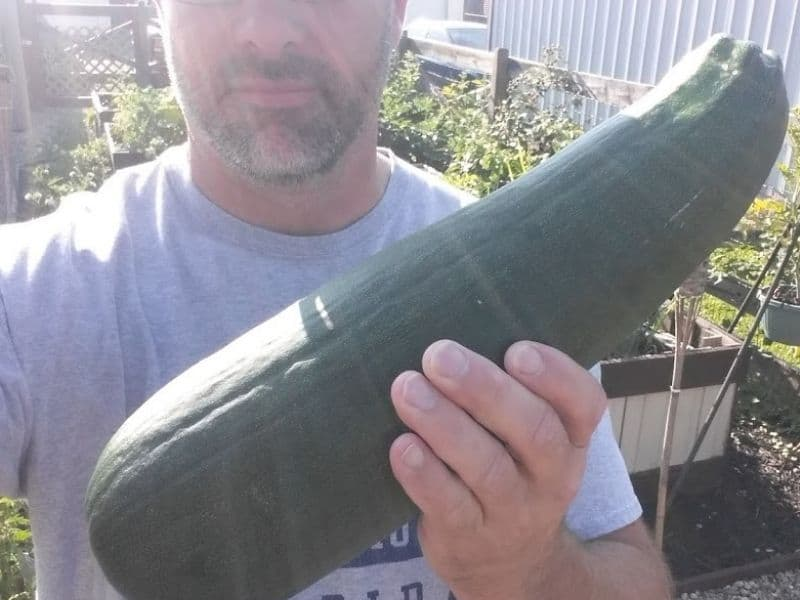 Photo of me with a zucchini from the garden