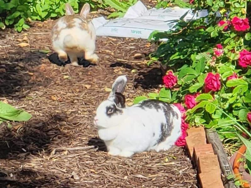 photo of rabbits in garden