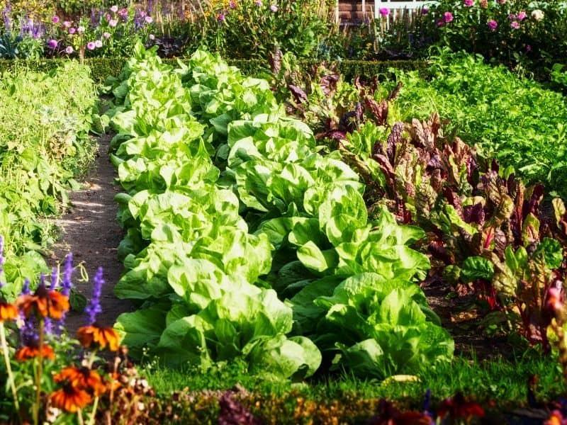 photo of vegetable garden