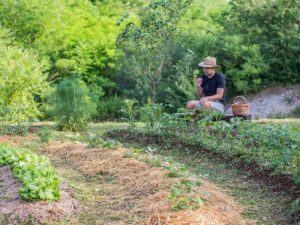 photo of a permaculture swale