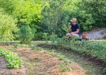 What's The Difference Between A Permaculture Swale and A Ditch?