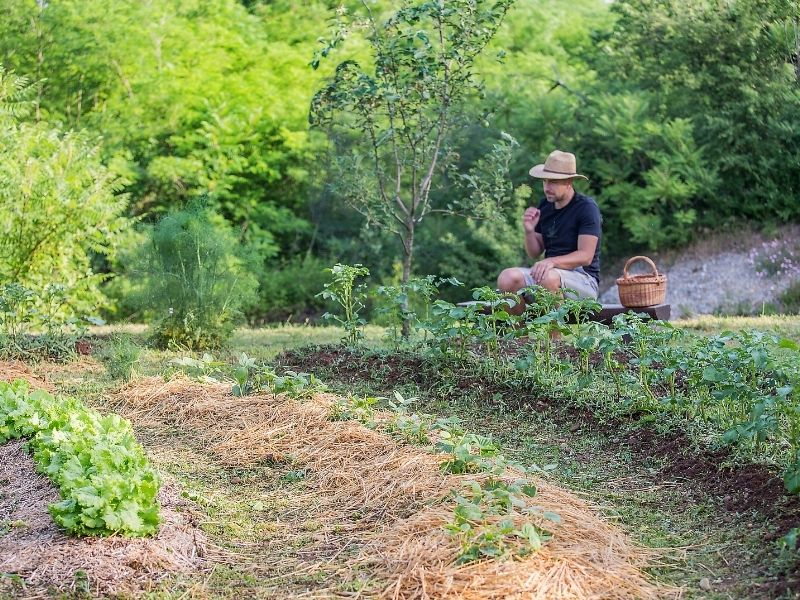 You are currently viewing What's The Difference Between A Permaculture Swale and A Ditch?