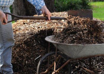 What Is Lasagna or Sheet Mulching  and How To Do It