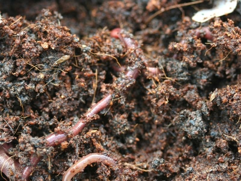 Photo of healthy living soil