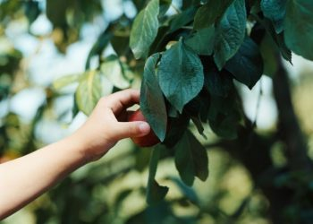 How Long Does It Take To Grow A Permaculture Food Forest?