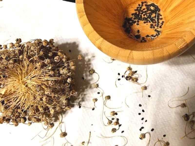 Saving Onion Seeds