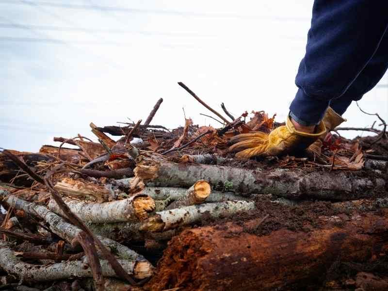 Hugelkultur Wood
